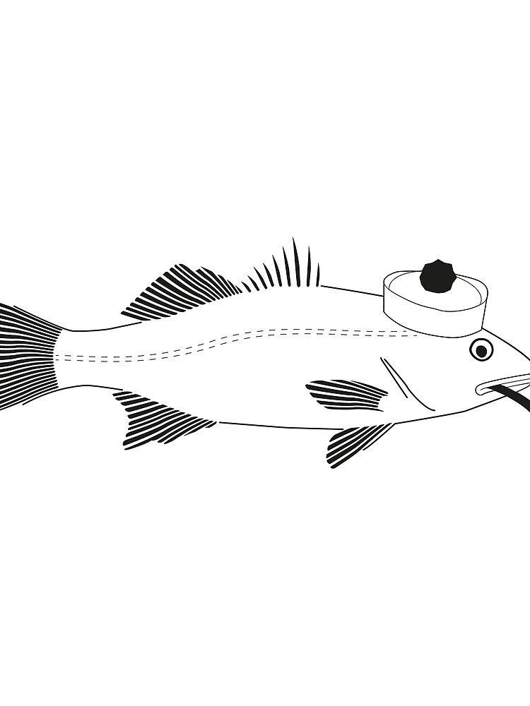 Sea bass disego by disego