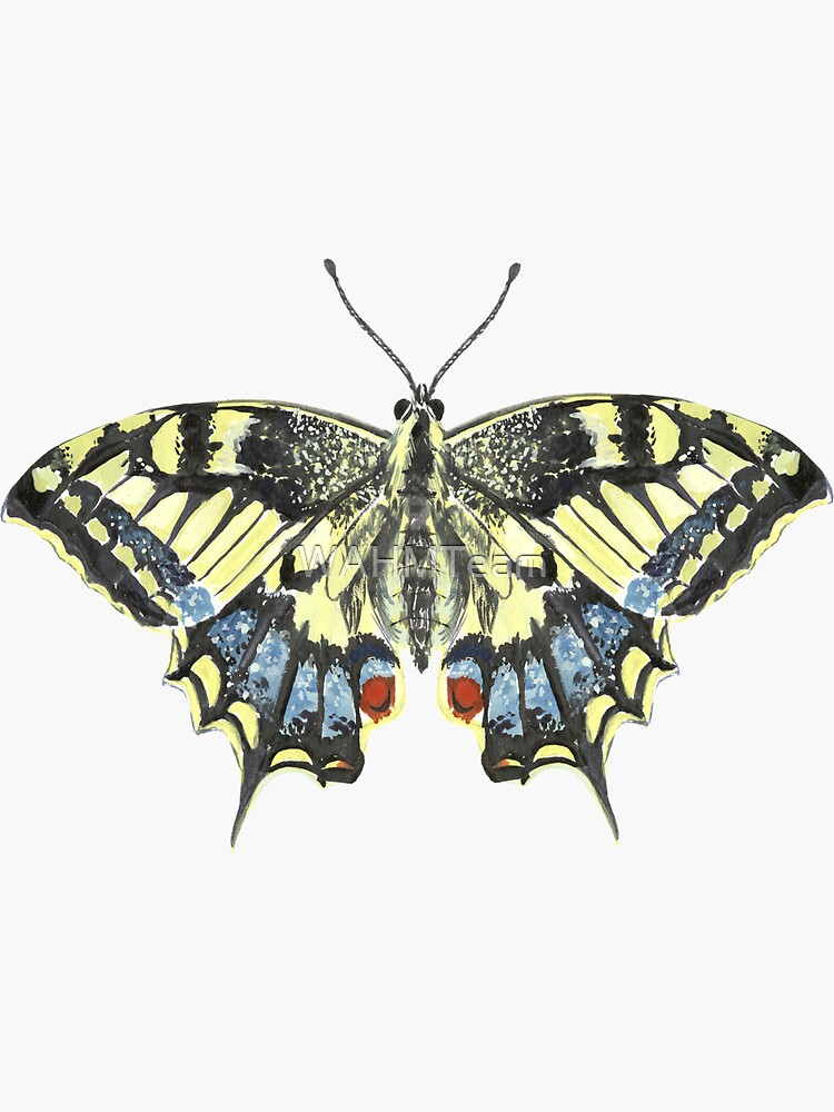 Swallowtail Butterfly Blue and Yellow Butterfly by WAHMTeam