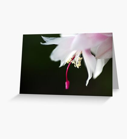 Dancing Delicate Zygocactus Greeting Card