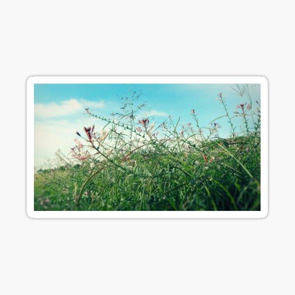 Field Wild Flowers Sticker