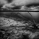 Dead Wood Salt Lake by David J Baster
