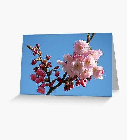 Cherry Blossom in the Blue Sky Greeting Card