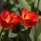 Fiery Tulips by Yannik Hay