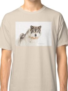 Timber Wolf in Snow Classic T-Shirt