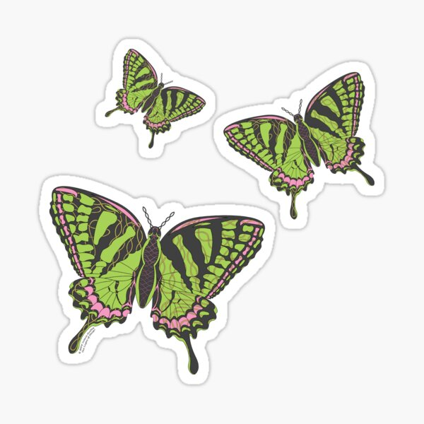 Celtic Swallowtail Sticker