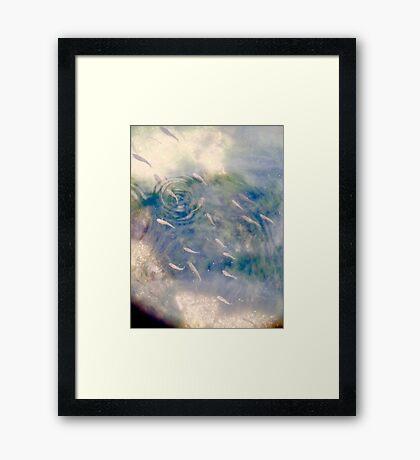 fishes Framed Print