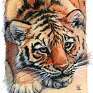 Resting Tiger Cub 896 by schukinart