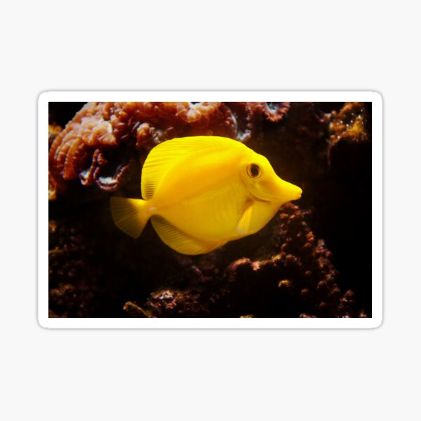 Smile ! - Happy Yellow Tang Sticker