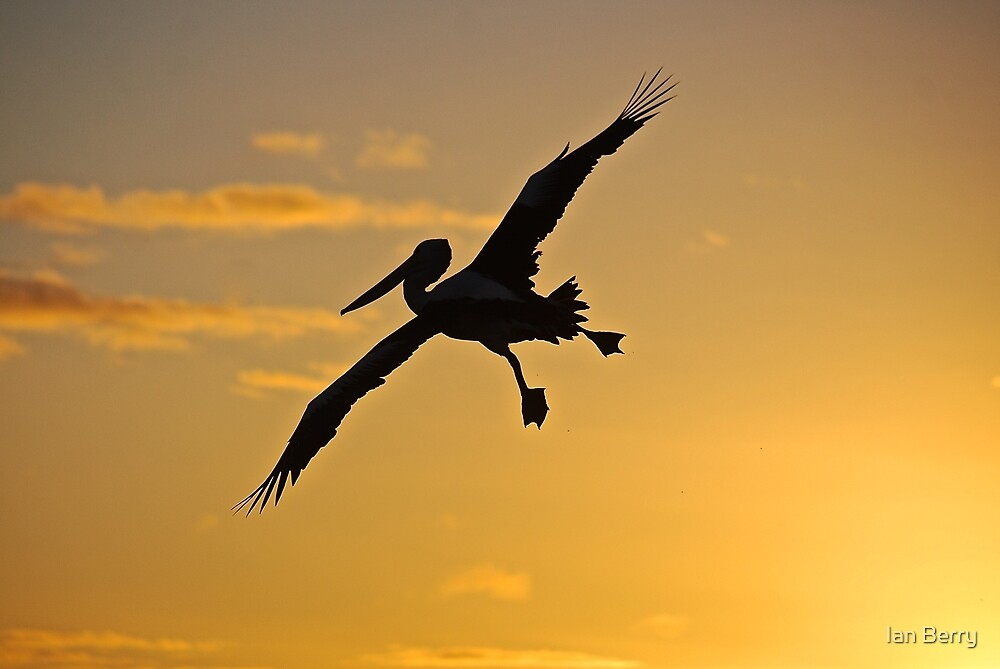 Pelican silhouette in the sunset by Ian Berry