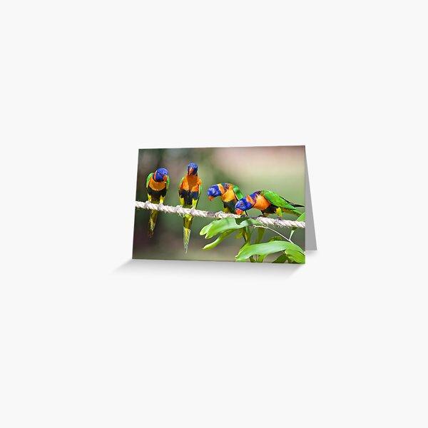 NT ~ PARROT ~ Red-collared Lorikeet D7kYAvhw by David Irwin 31012021 Greeting Card