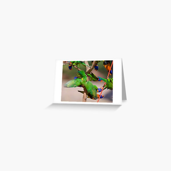 NT ~ PARROT ~ Red-collared Lorikeet 33biG3Mp by David Irwin 31012021 Greeting Card