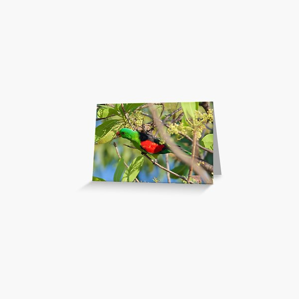 NT ~ PARROT ~  Red-winged Parrot PaoMNjm3 by David Irwin 31012021 Greeting Card