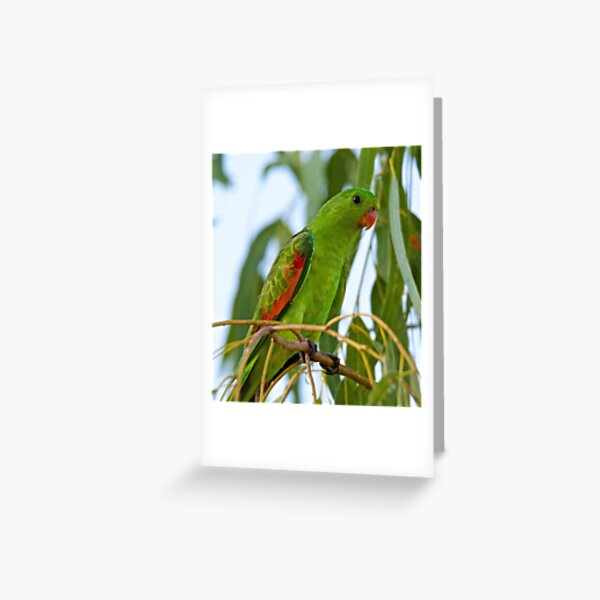 NT ~ PARROT ~ Red-winged Parrot b4TAHEEq by David Irwin 31012021 Greeting Card