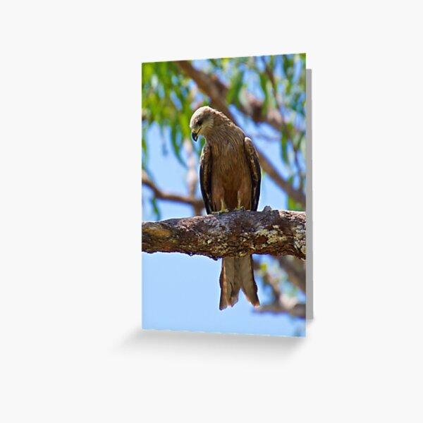 NT ~ RAPTOR ~ Square-tailed Kite HKCECDQQ by David Irwin 31012021 Greeting Card