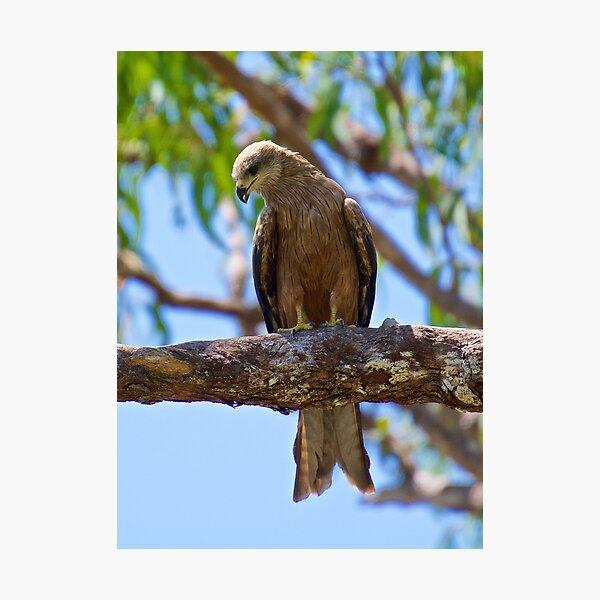NT ~ RAPTOR ~ Square-tailed Kite HKCECDQQ by David Irwin 31012021 Photographic Print