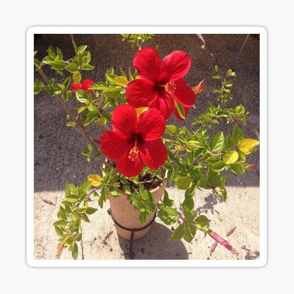 Red Flowers Sticker