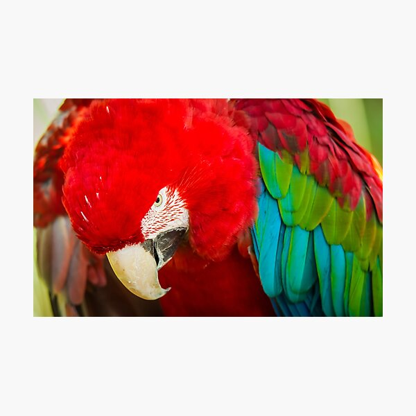 Scary Macaw Photographic Print