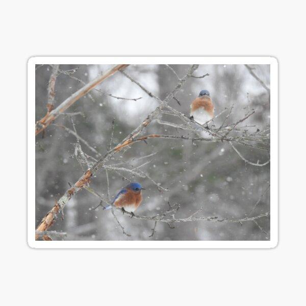 Bluebirds in Winter Sticker