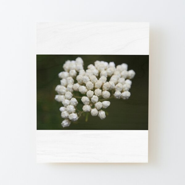 White Bouquet  Wood Mounted Print