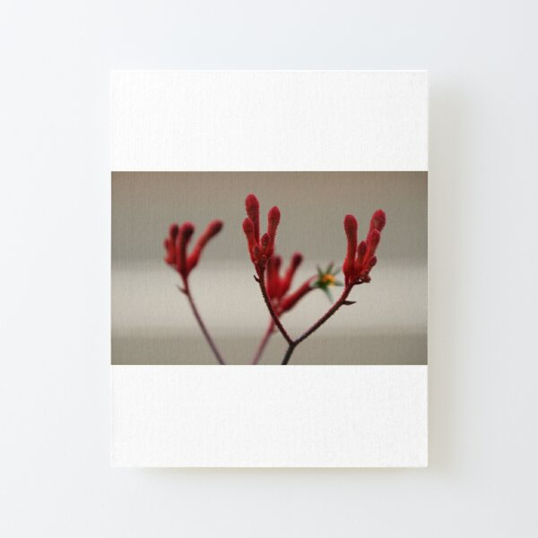 Red Stain Canvas Mounted Print