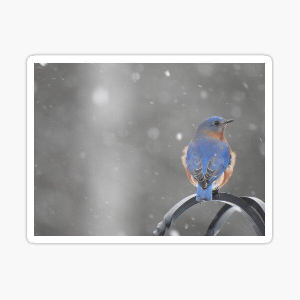 Bluebird in the Snow Sticker