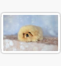 Cute cream pekingese puppy Sticker