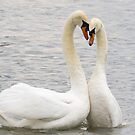 Swans Courtship Dance by Ellesscee