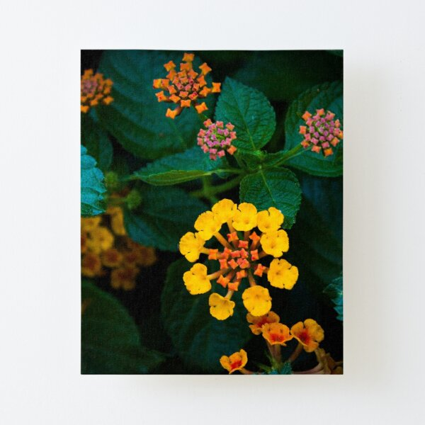 Colorful Flowers 12 Canvas Mounted Print