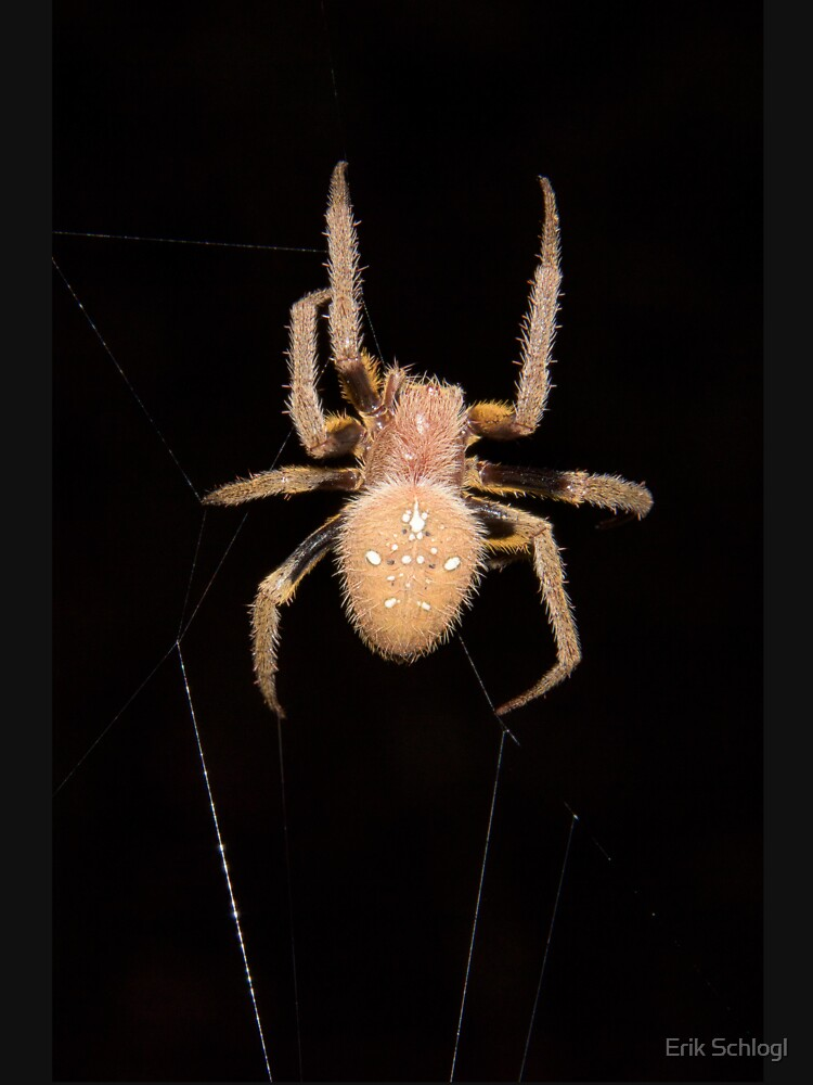 Orb-weaving spider in the Peruvian rainforest by eschlogl