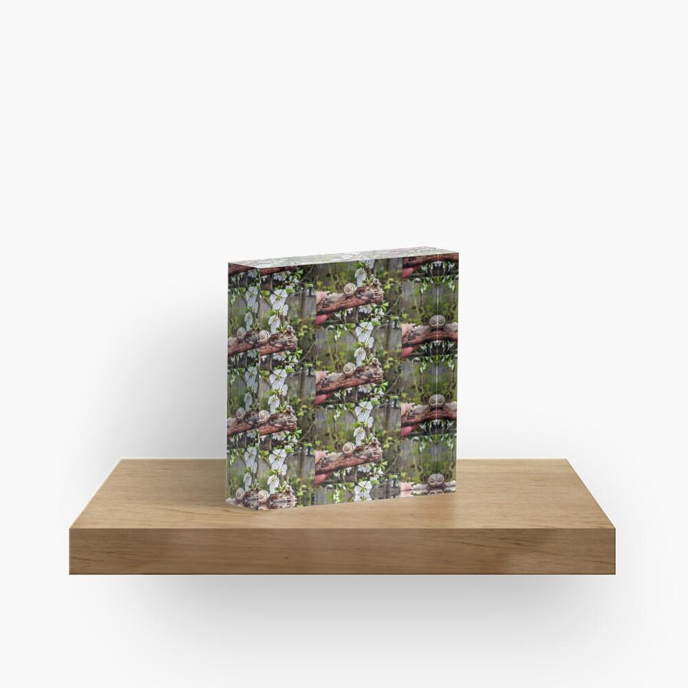 The garden snail (Helix aspersa)  By Yannis Lobaina  Acrylic Block