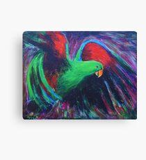 Eclectus parrot Canvas Print