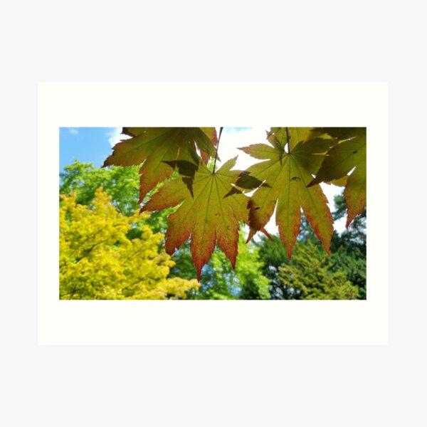 Seasons Change Autumn Is Coming Westonbirt Arboretum Art Print