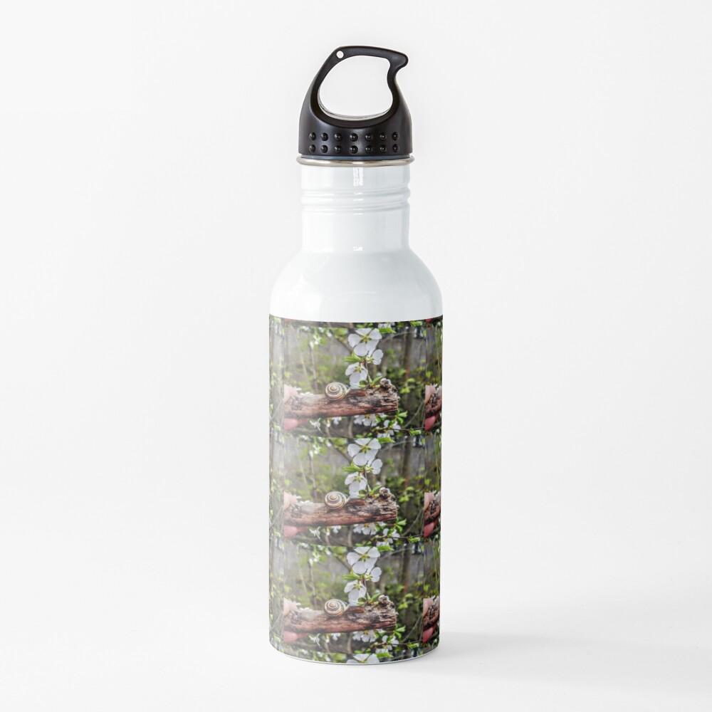 The garden snail (Helix aspersa)  By Yannis Lobaina  Water Bottle