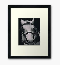 White Horse In Dark Background Framed Print
