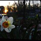 flower004, 2016-04 by mark drago