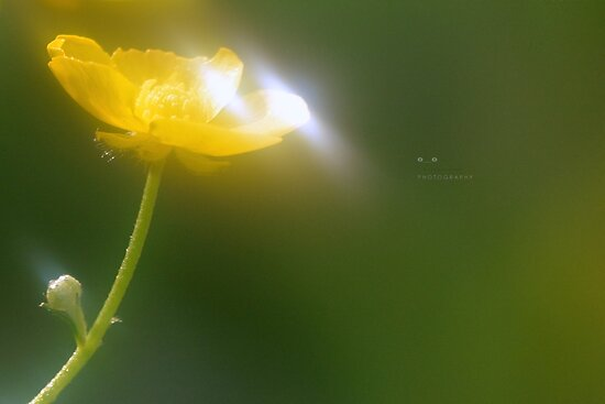 """"""" Cup Of Light """" by Richard Couchman"""