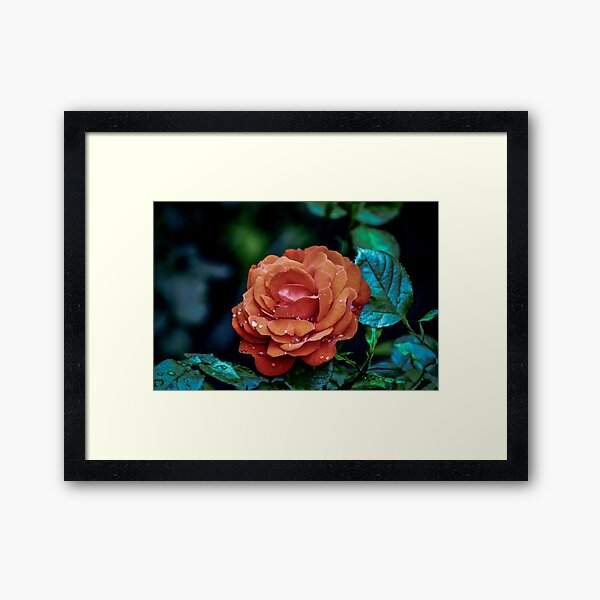 after the storm  Framed Art Print
