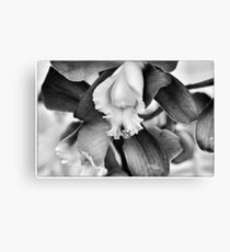 an Orchid... Canvas Print