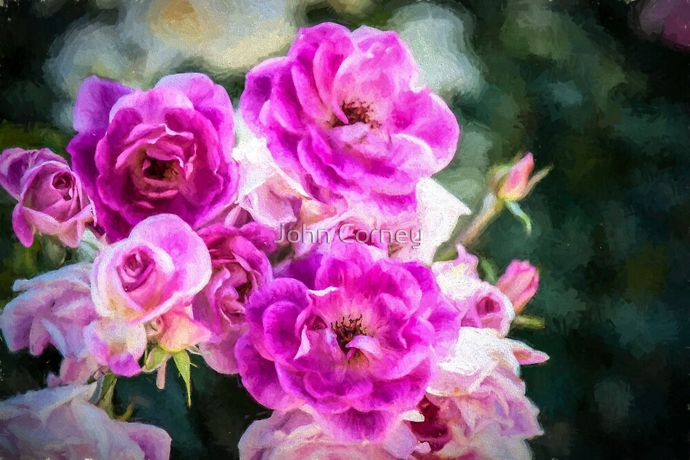 Pink Roses by John Corney