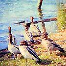 Ducks at Lake Conjola  by Candy Jubb