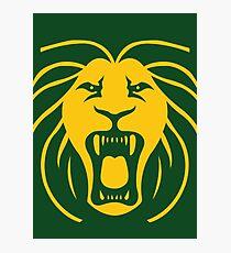 Les Lions Photographic Print