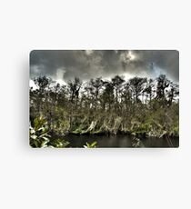 Everglades in HDR Canvas Print