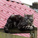 Just a Cat by ienemien