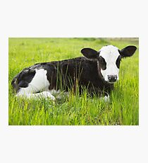 Happy In The Green Grass... Photographic Print