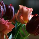 Peach and deep red tulips by Janys Hyde