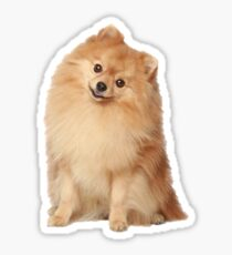 Pom Sticker Sticker