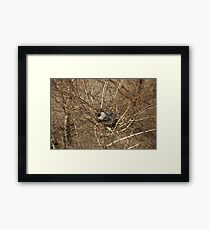 Crow sitting in a nest Framed Print