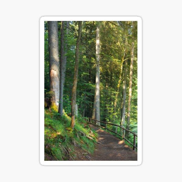 path through coniferous forest in dappled light Sticker