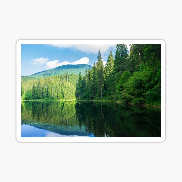 lake among the pine forest Sticker