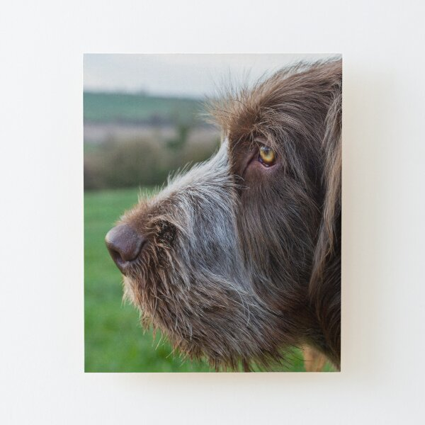 Spinone dreamer Wood Mounted Print